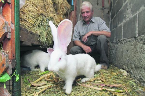 разводим кроликов