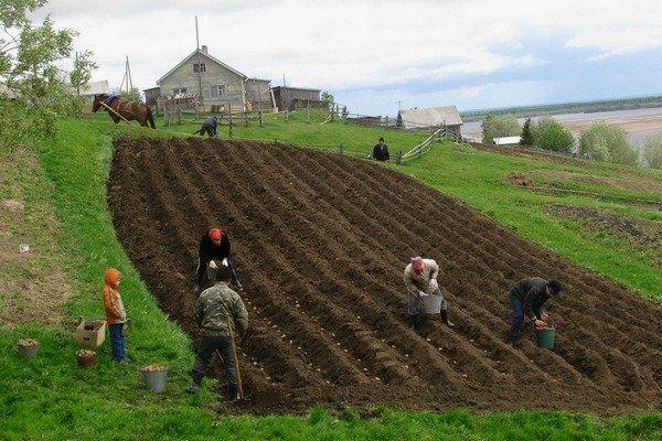 Кредит для сельского хозяйства по госпрограмме