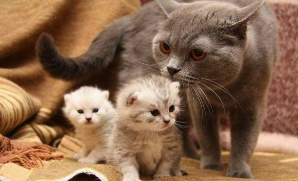 Содержание и питание кошек