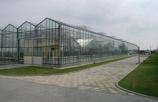 Выбор земельного участка и постройка теплицы
