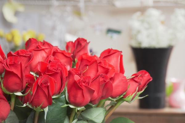 Поставщики цветов