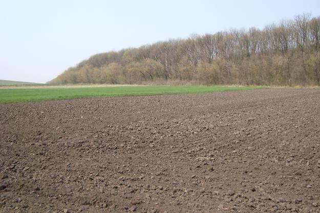 Стоимость земельного пая