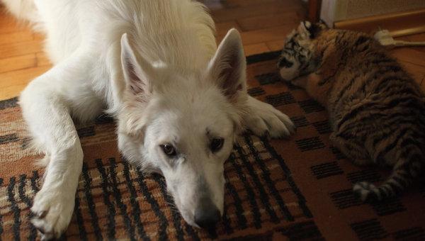 Риски при открытие ветеринарной клиники