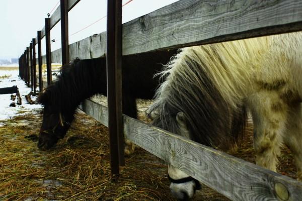 Бизнес на разведение лошадей