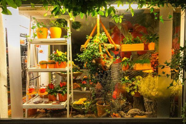 Оформление витрин цветочных магазинов